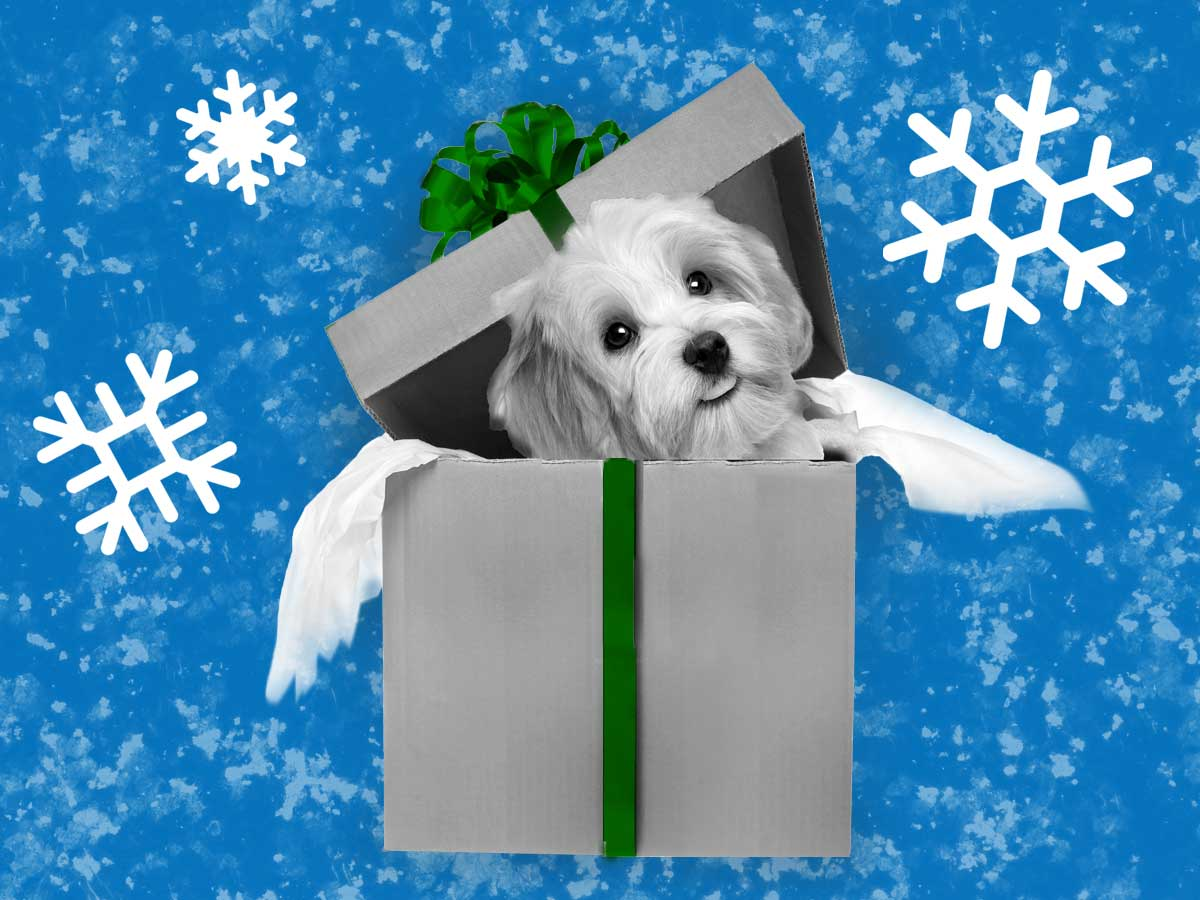photo illustration of a puppy in a gift box with graphic winter background