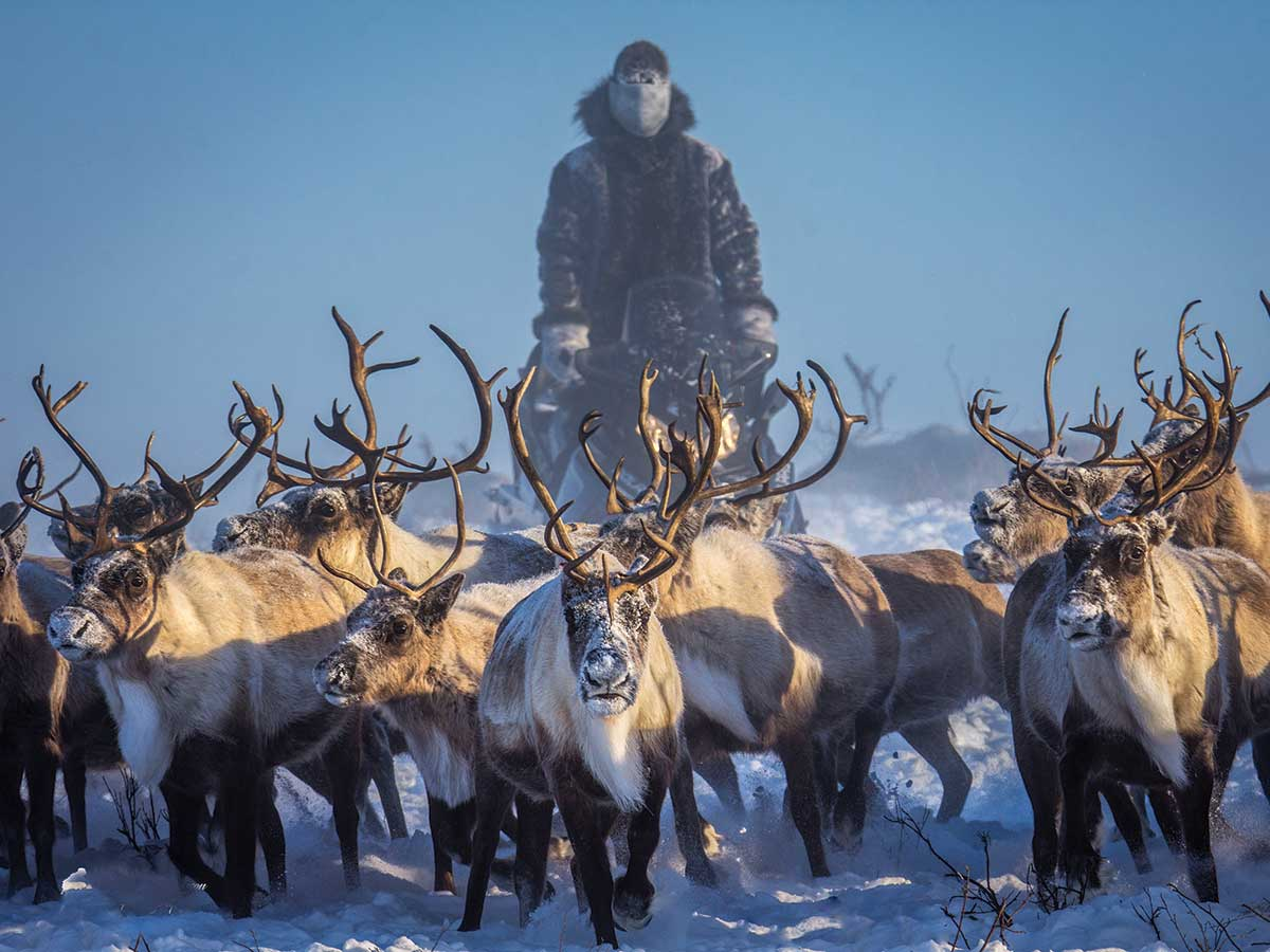 Tundra North Tours founder Kylik Kisoun Taylor with a herd of reindeer in Inuvik