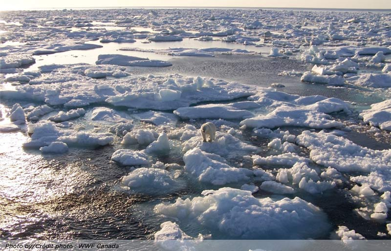 An image of a large area of broken ice in the artic with a solitary polar bear. Photo by WWF Canada