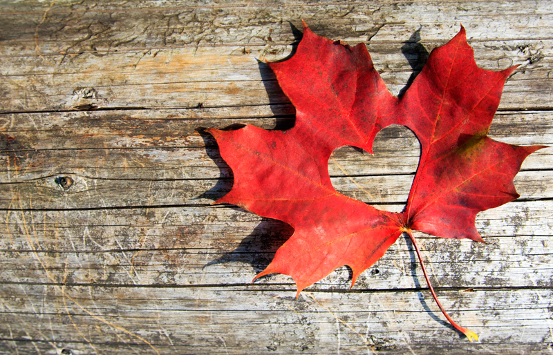 A red Canadian maple leaf with a hole the shape of a heart