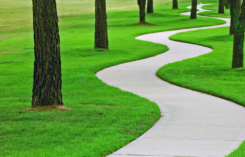Pathway running through trees and green grass