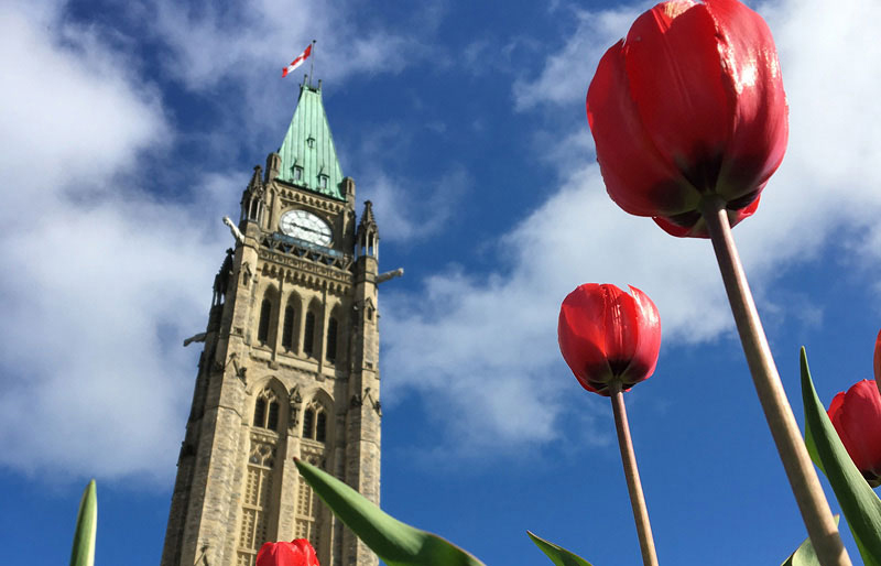 Peace Tower on Parliament hill with red tulips in foreground